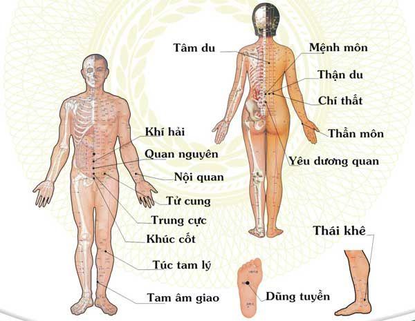Các huyệt đạo chính trên cơ thể