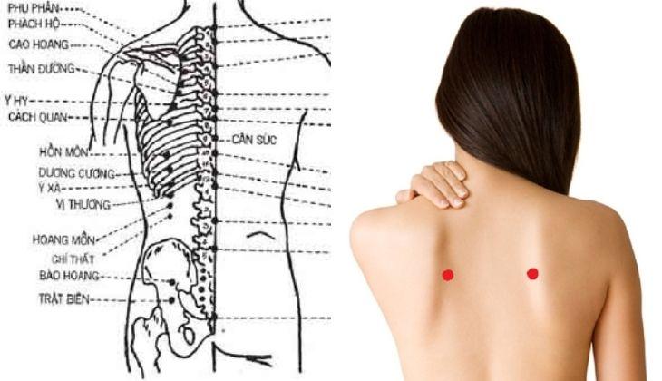 Huyệt nằm ở ngay dưới đốt sống lưng thứ 4 (D4) đo ra 3 thốn ( sát bờ trong xương bả vai )